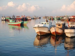 Fishing boats in Benoa Harbour
